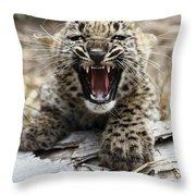 Persian Leopard Cub Snarling Throw Pillow