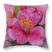 Peruvian Pink Throw Pillow