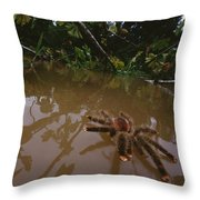 Peruvian Pinktoe Tarantula Peru Throw Pillow