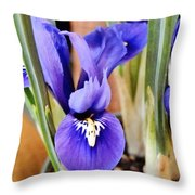Petite Dutch Irises Throw Pillow