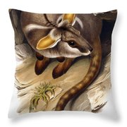 Petrogale Xanthopus      Ch 991244 Throw Pillow by English School