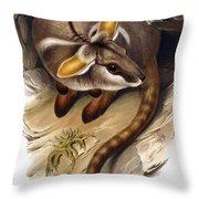 Petrogale Xanthopus      Ch 991244 Throw Pillow