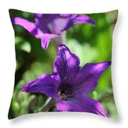 Petunia Hybrid From The Sparklers Mix Throw Pillow