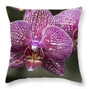 Phalaenopsis Helen Alice Mary 2220 Throw Pillow