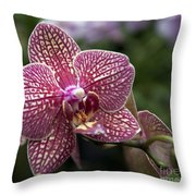 Phalaenopsis Helen Alice Mary 2308 Throw Pillow