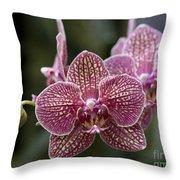 Phalaenopsis Helen Alice Mary 2346 Throw Pillow