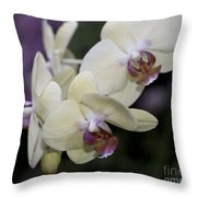 Phalaenopsis Ming Chao Dancer   8585 Throw Pillow