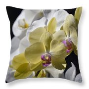 Phalaenopsis Orchids 2777 Throw Pillow