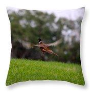 Pheasant Take Off Throw Pillow