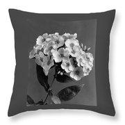Phlox Blossoms Throw Pillow