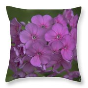 Phlox Nicky Throw Pillow