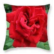 Photograph Reddest Of Roses Throw Pillow