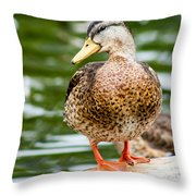 Picture Perfect - Mallard Duck Throw Pillow