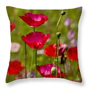 Picture Perfect Too Throw Pillow