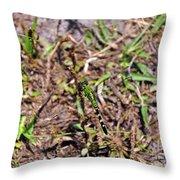 Picturesque Pondhawk Throw Pillow