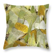 Pierid Butterfly Pieridae Puddling Throw Pillow