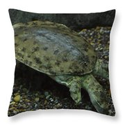 Pig-nosed Turtle Throw Pillow