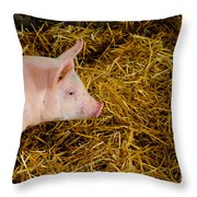 Pig Standing In Hay Throw Pillow by Amy Cicconi