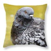 Pigeon Bath Throw Pillow