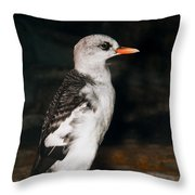 Pigeon Guillemot Juvenile Throw Pillow