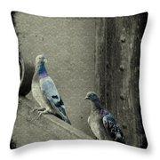 Pigeons In Damask Throw Pillow