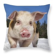 Piglet Walking In The Snow Throw Pillow