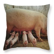 Momma Pig And Piglets Throw Pillow by Terry DeLuco