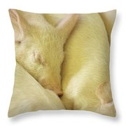 Pigs Sleeping Throw Pillow