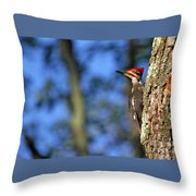 Pileated Series #14 Throw Pillow