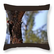 Pileated Series #5 Throw Pillow