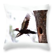 Pileated Series #7 Throw Pillow