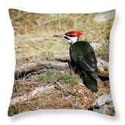 Pileated Woodpecker Forest Floor Throw Pillow
