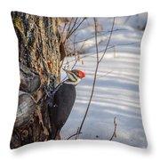 Pileated Woodpecker Winter Throw Pillow