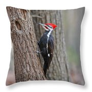 Pileated Woodpecker Foraging Throw Pillow