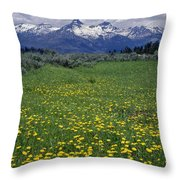1a9210-pilot Peak And Wildflowers Throw Pillow