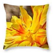 Pin Striped Tulip Throw Pillow