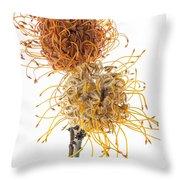Pincushion Protea Throw Pillow