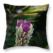 Pine Cone Buds Throw Pillow