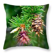 Pine Cone Stages Throw Pillow