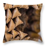 Pine Cone Study 16 Throw Pillow