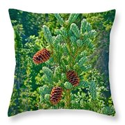 Pine Cones On Spruce Tree In Rancheria Falls Recreation Site-yt Throw Pillow