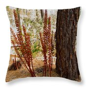 Pine Drops And Ponderosa Pine In Des Chutes Nf-or  Throw Pillow