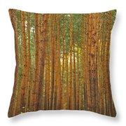 Pine Forest Lienewitz Germany Throw Pillow