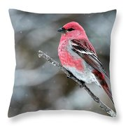 Pine Grosbeak  Pinicola Enucleator Throw Pillow