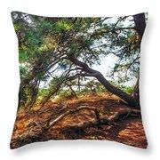 Pine Tree In Hoge Veluwe National Park 2. Netherlands Throw Pillow
