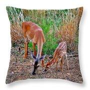 Piney Mountain Doe And Fawn Throw Pillow