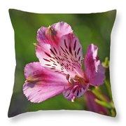 Pink Alstroemeria Flower Throw Pillow