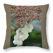 Pink And Green Hydrangea Closeup Throw Pillow