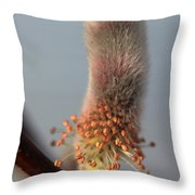 Pink And Grey Pussy Willow In Bloom Throw Pillow