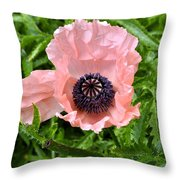 Pink And Purple Poppy Throw Pillow